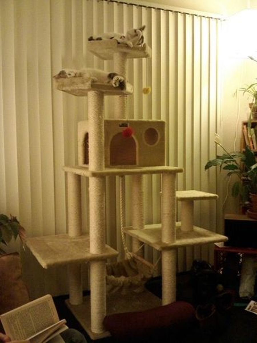 Make Your Own Cat Trees Towers And Other Structures Pethelpful By Fellow Animal Lovers And Experts