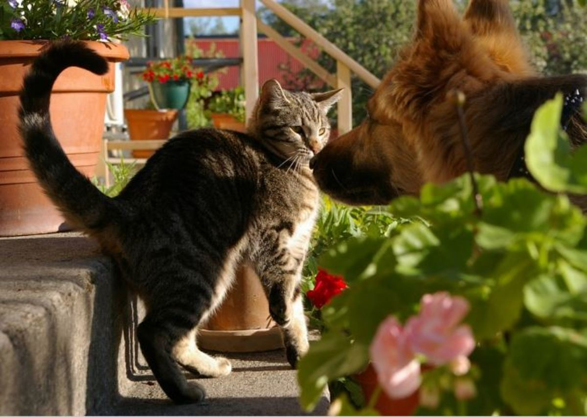 how-to-stop-a-dog-from-chasing-cats