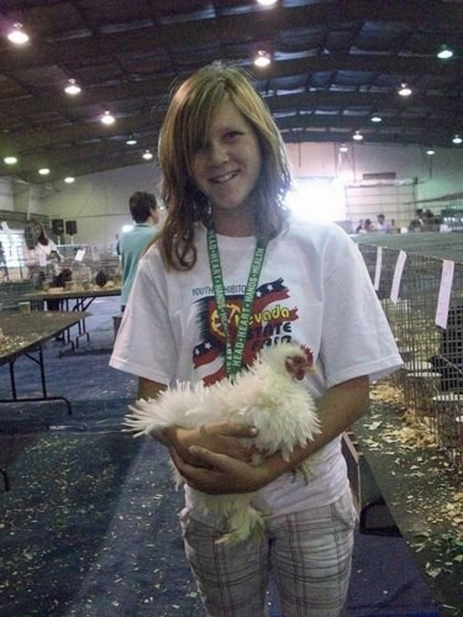 This is Frizzle, a beloved chicken pet