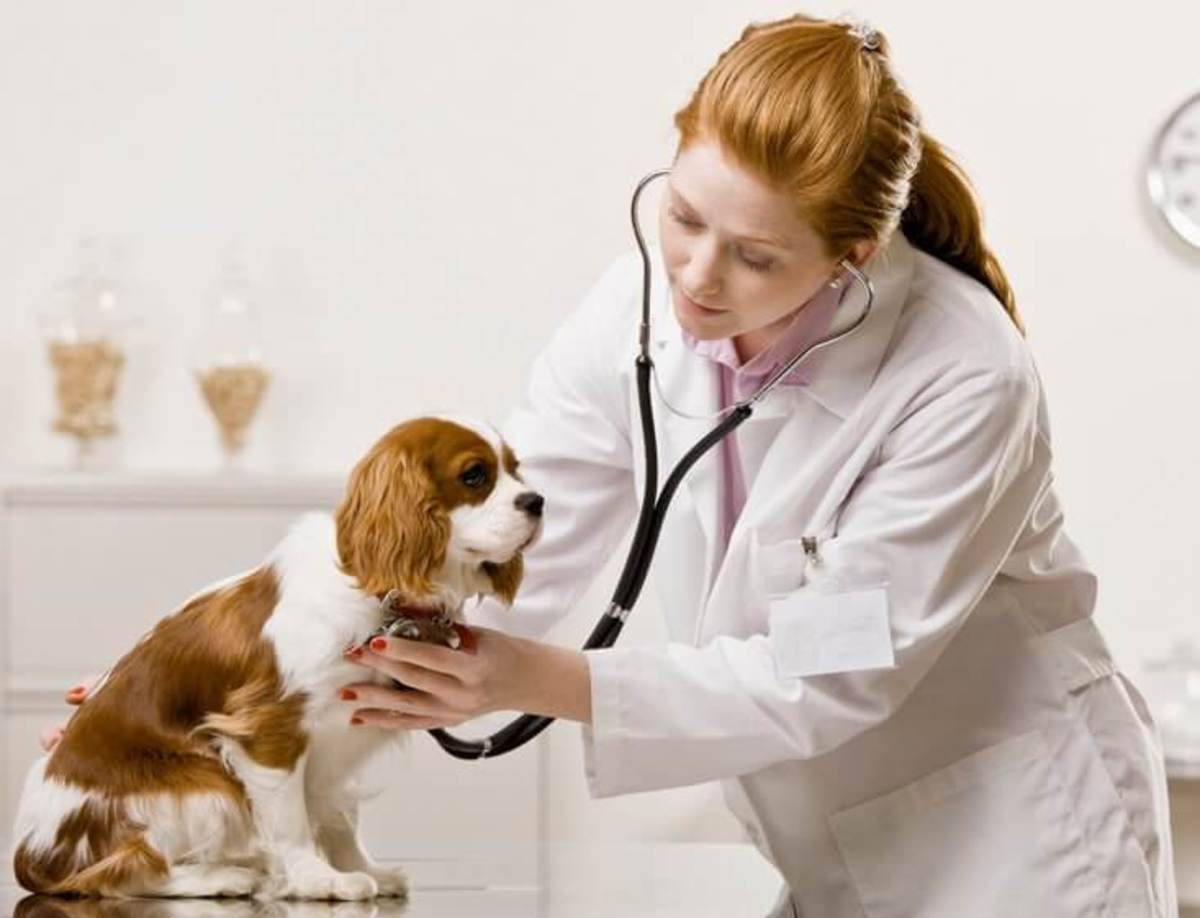 Take your dog to the vet for a proper diagnosis.