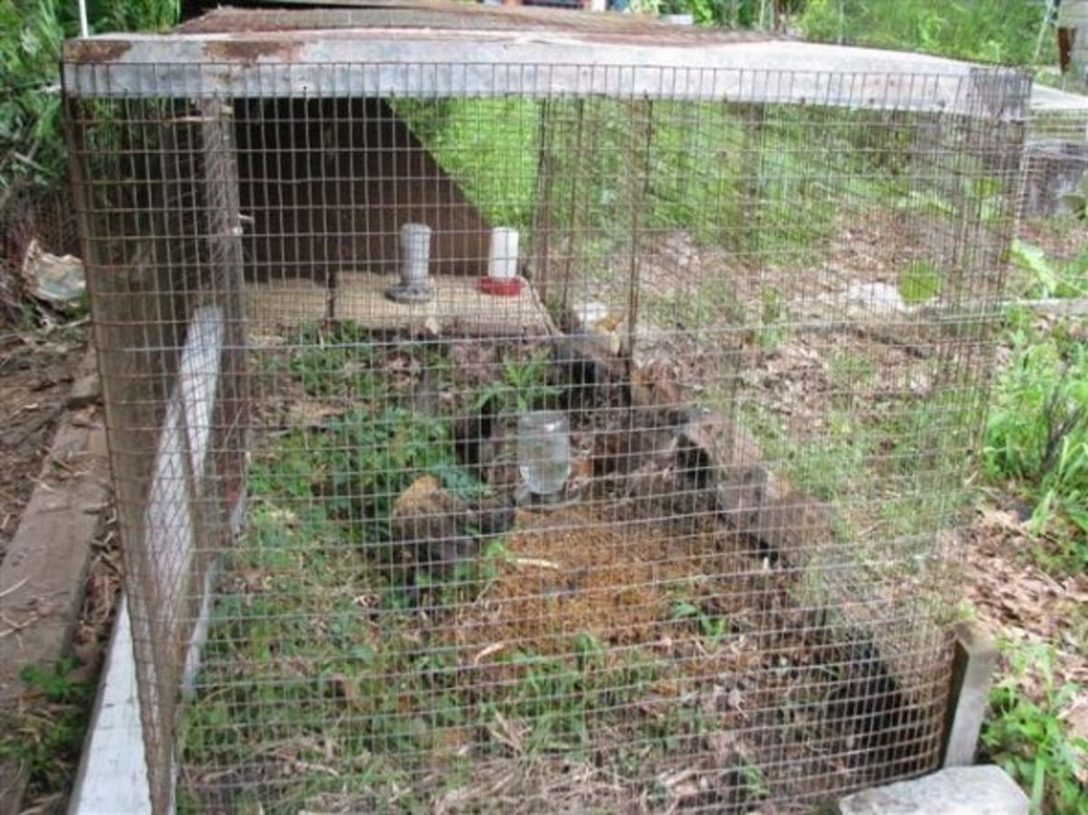 """Building a Movable Chicken """"Tractor"""" Coop"""