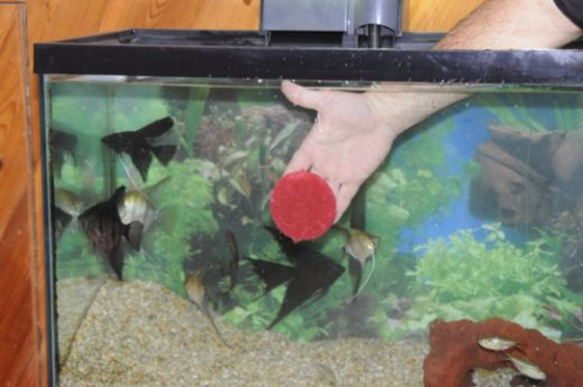 how you can have a healthy aquarium with simple water changes and