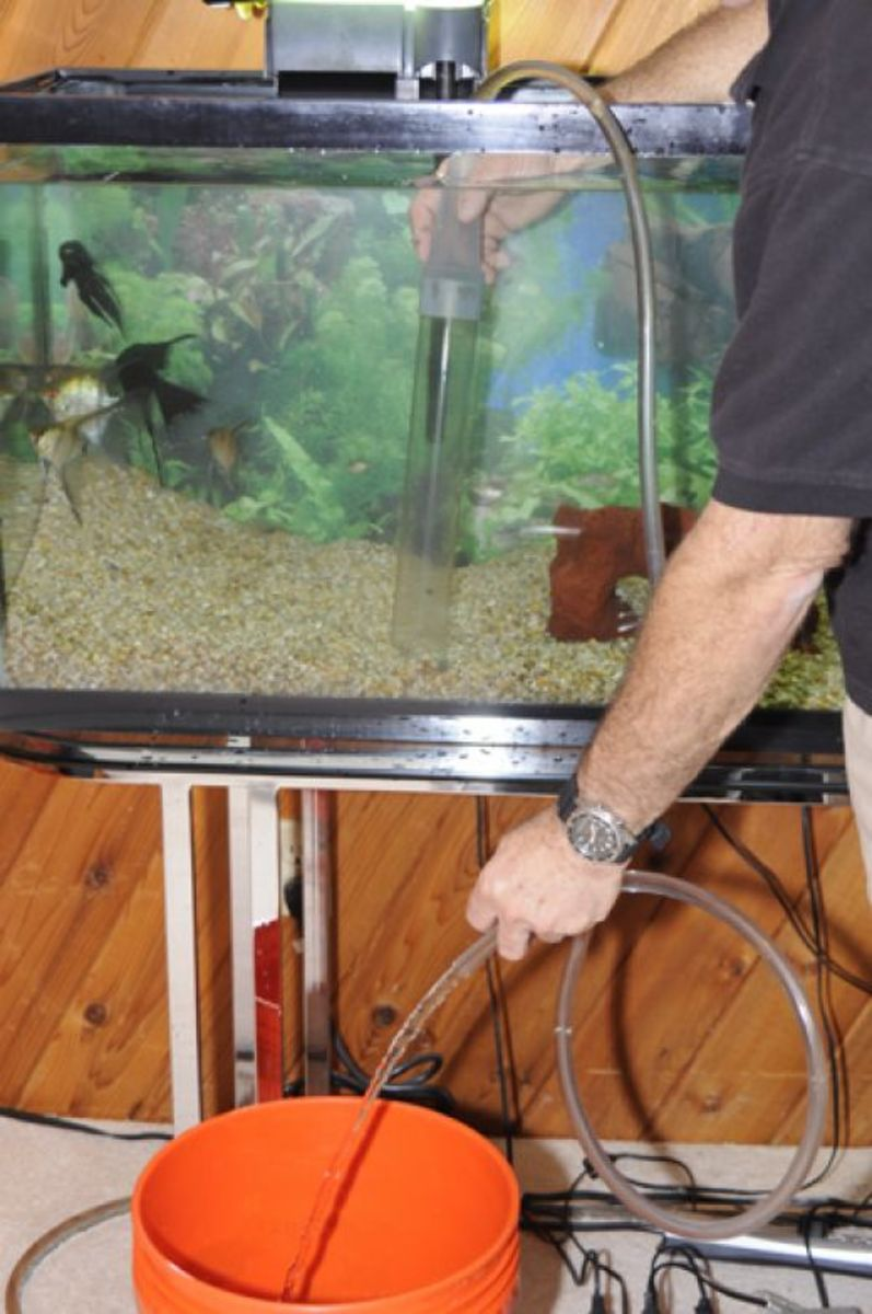 You will syphon the water and clean the sediment from the gravel.