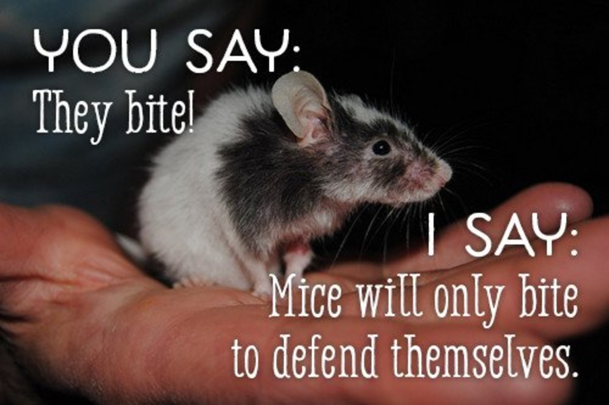 You say they bite. I say mice will only bit to defend themselves.