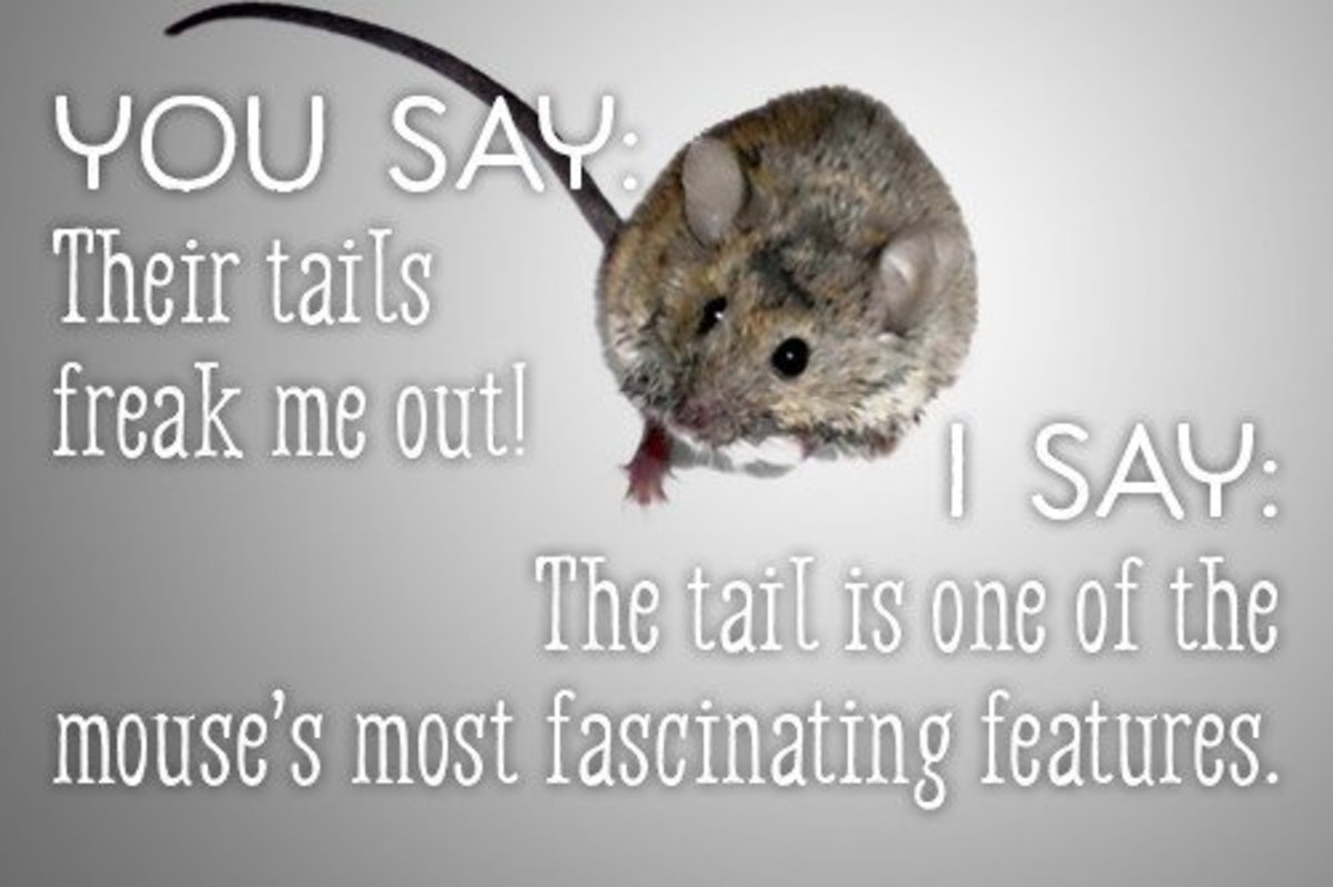You say their tails freak me out! I say the tail is one of the most fascinating features of the mouse.