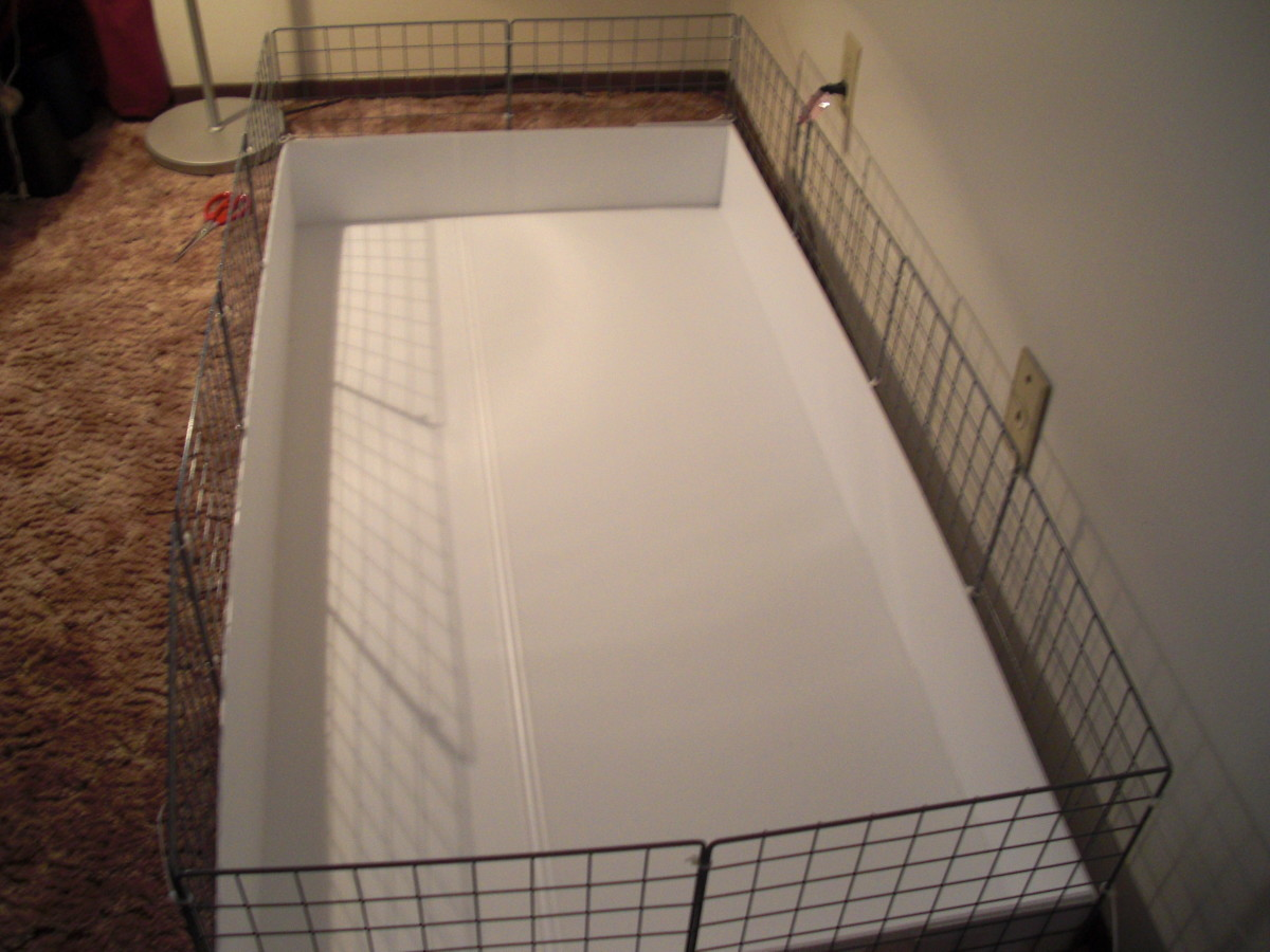 how-to-build-a-cc-cage-for-your-guinea-pig