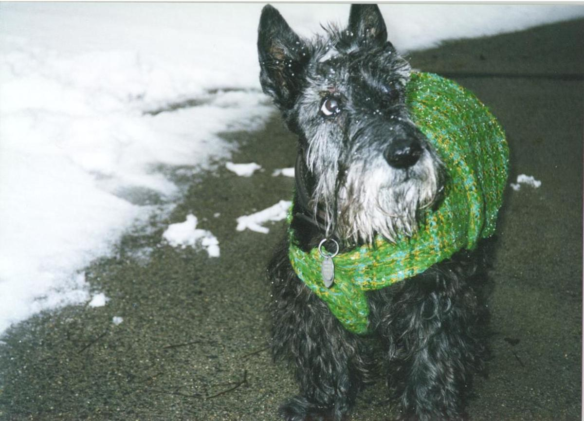 Banquo.  Scotties will reward you with years of love in return for understanding.