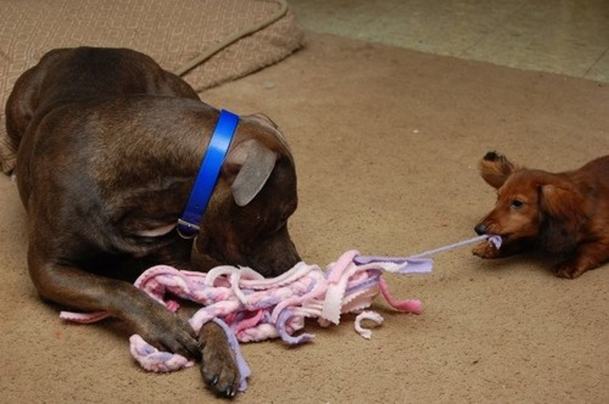 Fleece Pull Toy: Strips of fleece tied together can make a fun pull and tug toy for your dogs. It is a great way to use up fleece clothing that is no longer worth wearing.