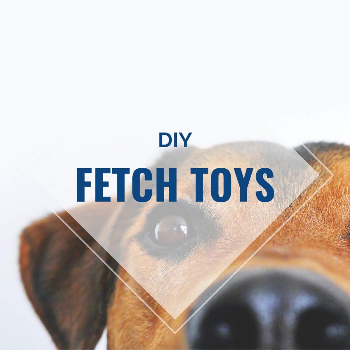 DIY Fetch Toys