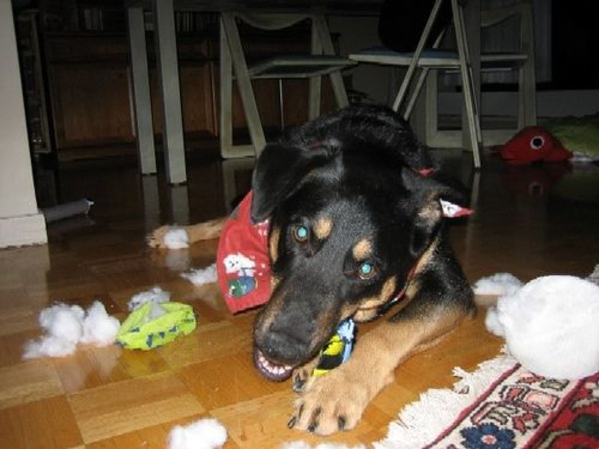 Strong Dogs Need More Robust Toys