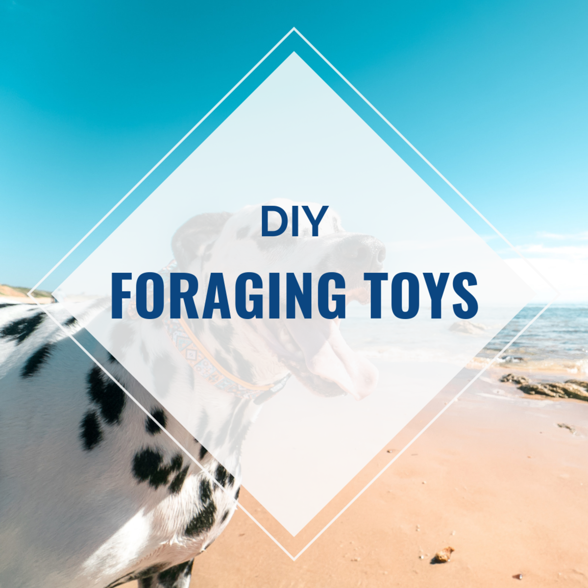 DIY Foraging Toys