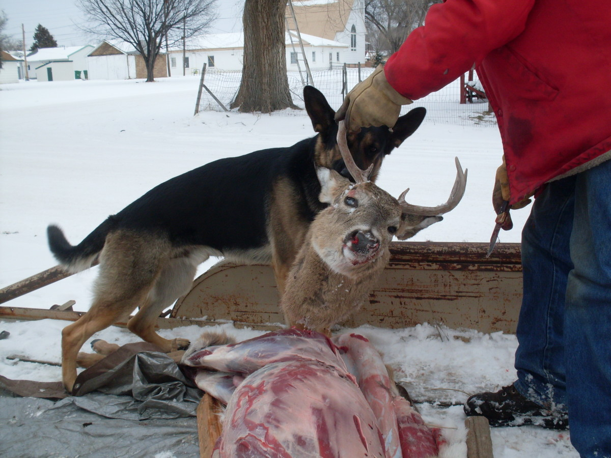 """If you have a hard core raw fed dog, you can feed the neck to your dog. This might be too much bone for a """"softer"""" dog."""
