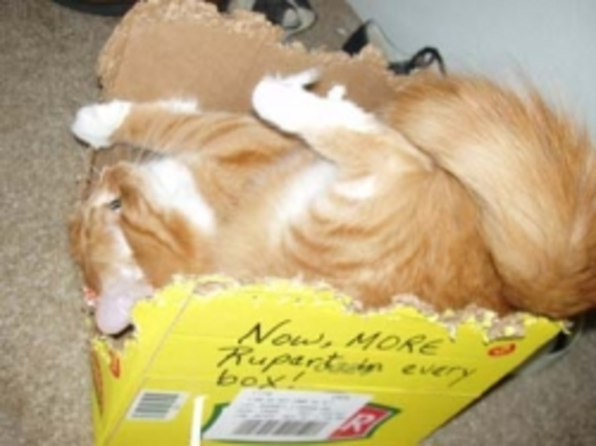 Rupert loves to chew up his cardboard boxes!