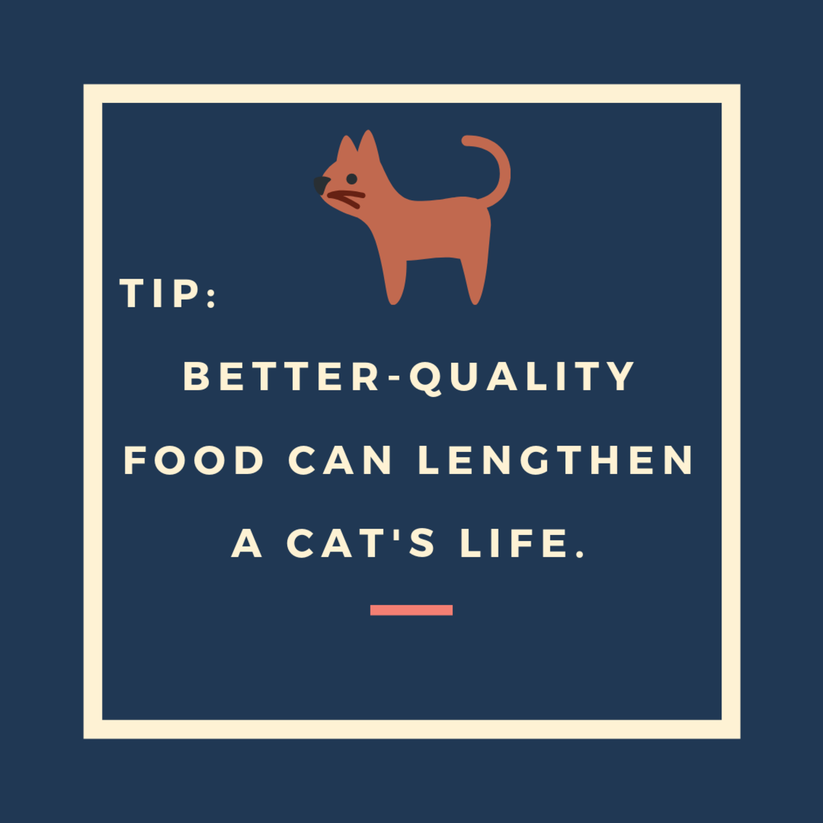 Feed High-Quality Cat Food