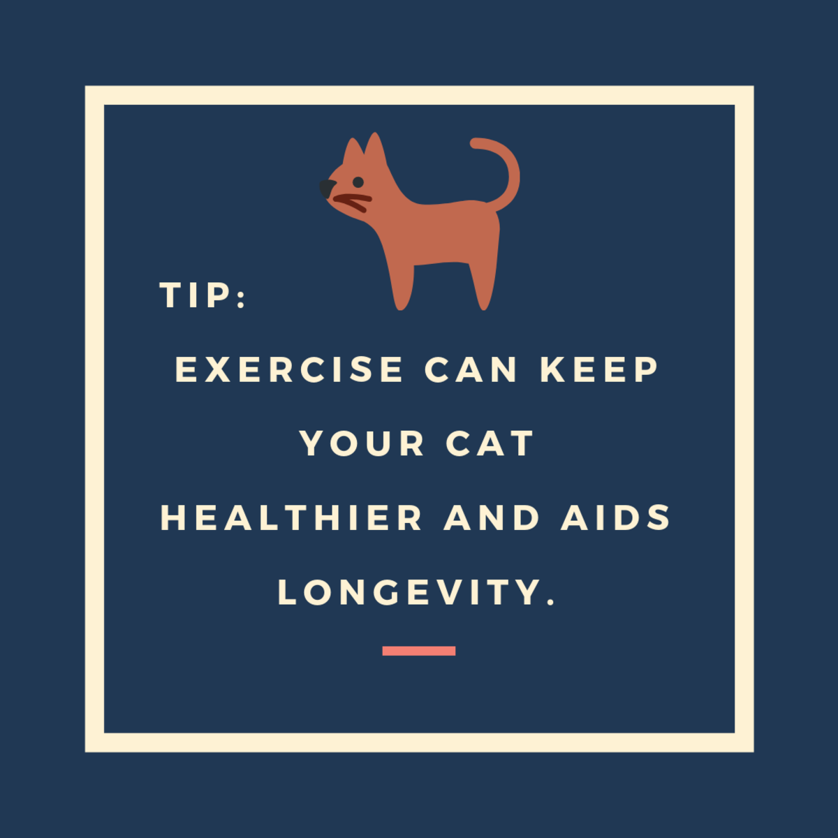 Exercise Your Cat