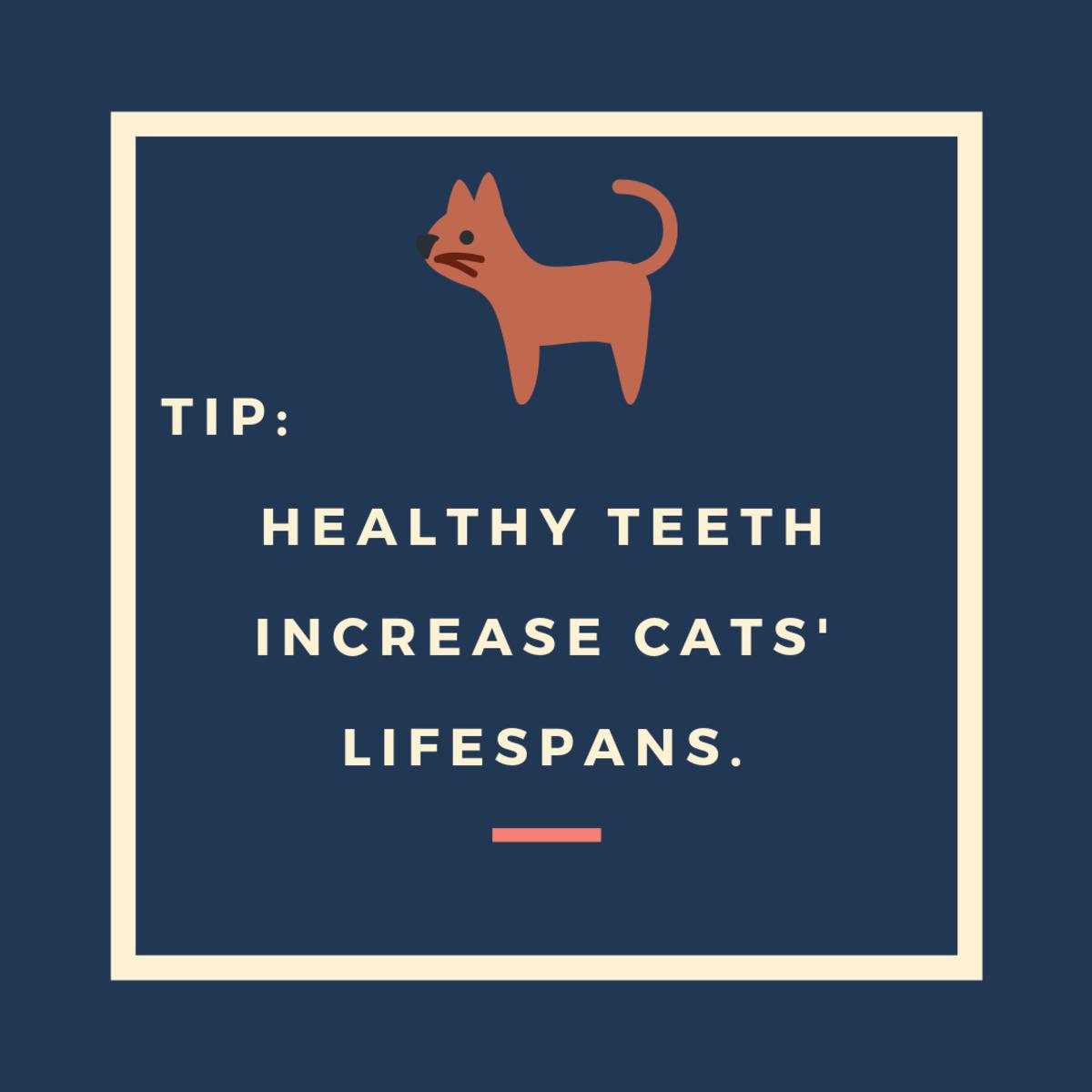 Practice Good Dental Hygiene