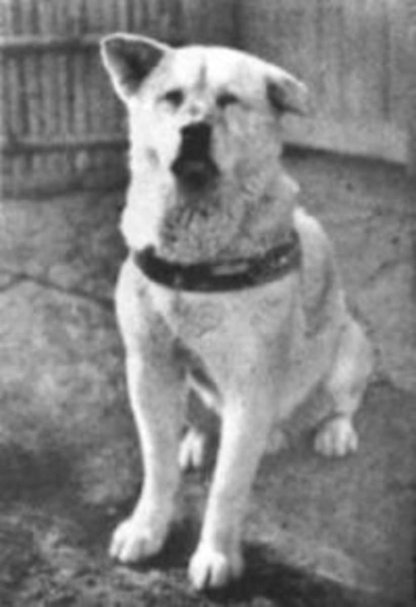 A tattered Hachiko