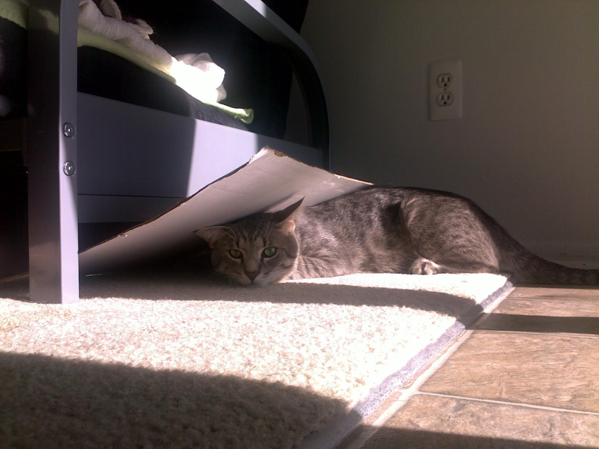 There are many uses for cardboard boxes.