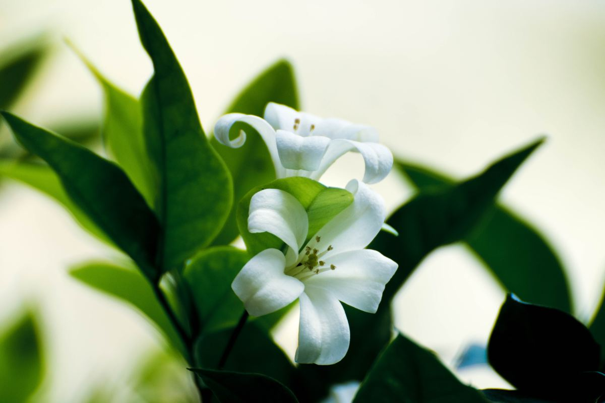 Eastern Lilies are highly poisonous to cats.