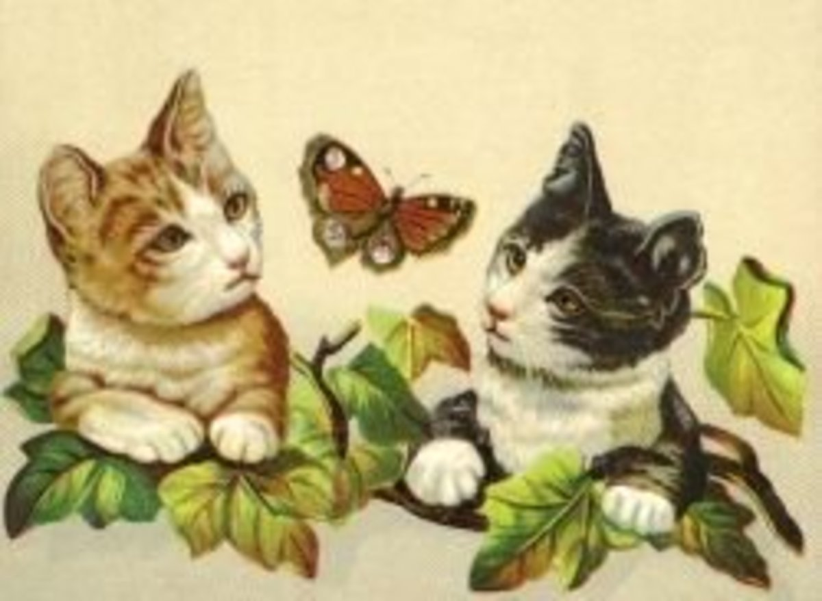 Two cats and a plant