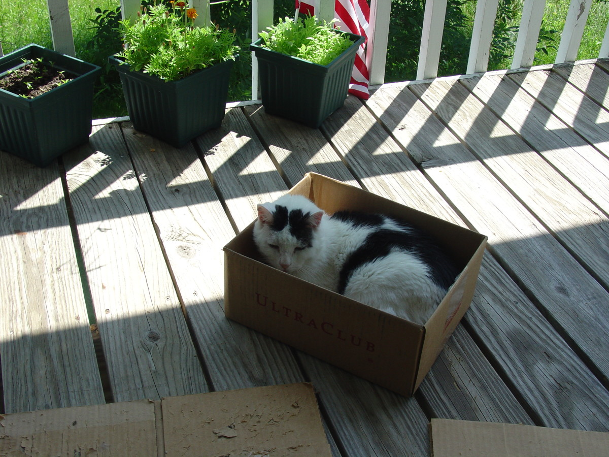 Ethel Chilling in Her Box...RIP Ethel~ June 3, 2011