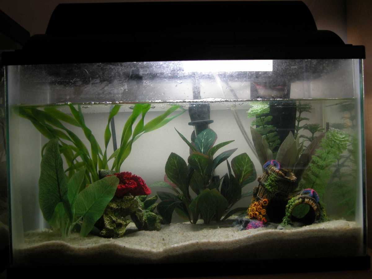 This is a good example of a tank for dwarf frogs.