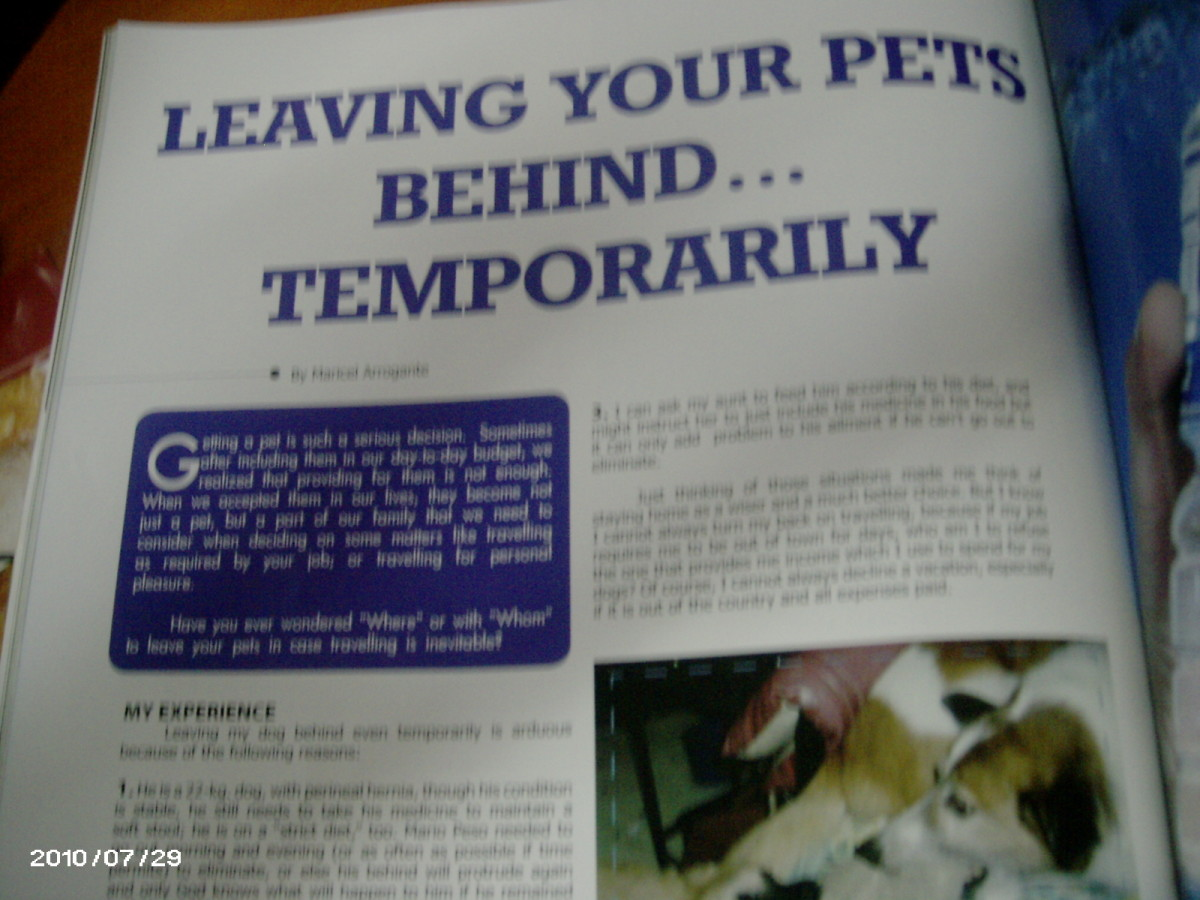 Leaving your pets behind, temporarily, suggestions based on personal experience