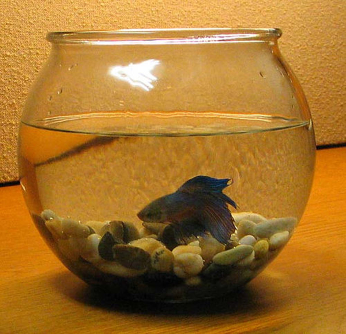 Bowls or vases are not suitable homes for fish.