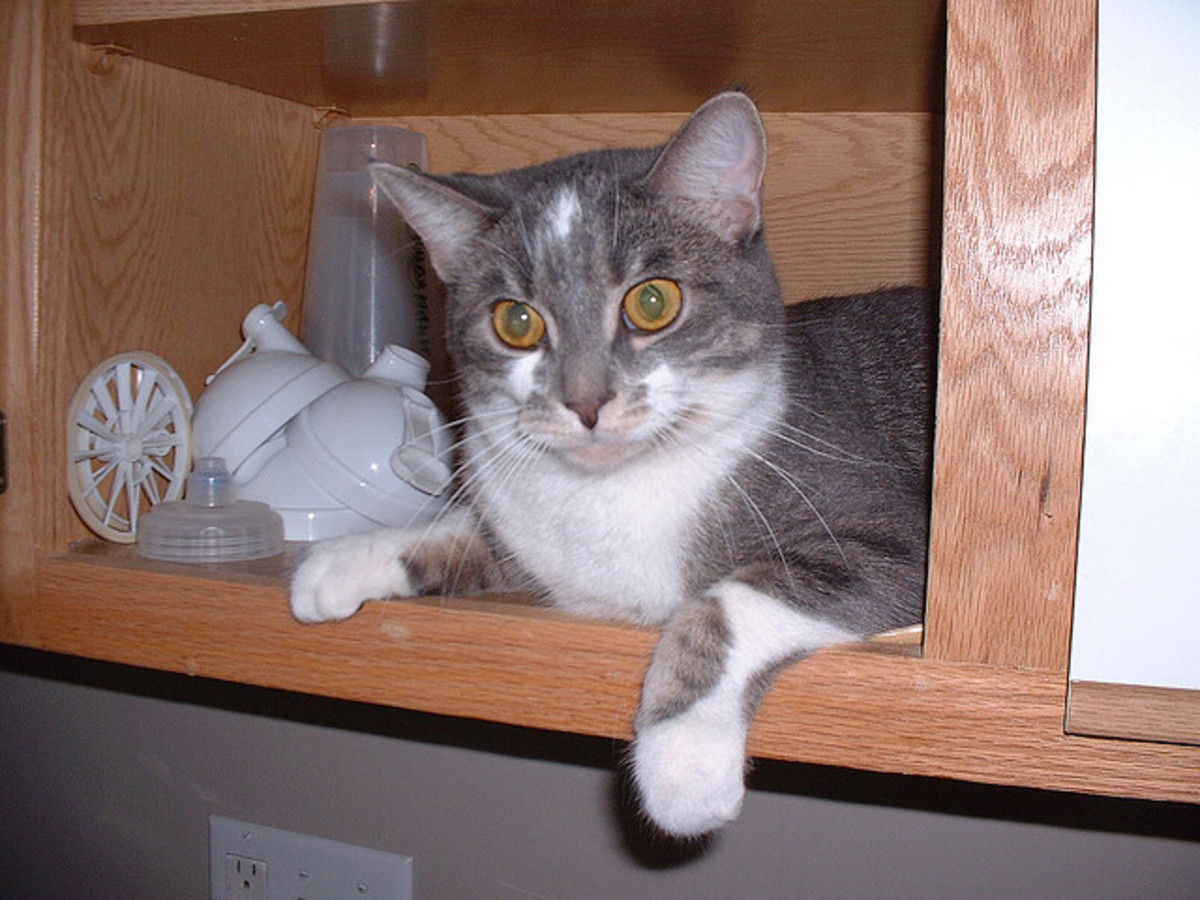 My cat, the Naughty Nibbler, in his healthy days.