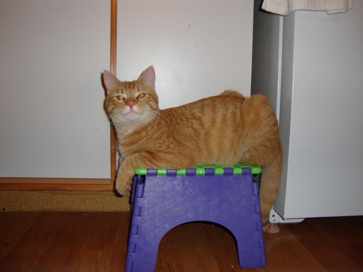 Our Cat, Tweeg