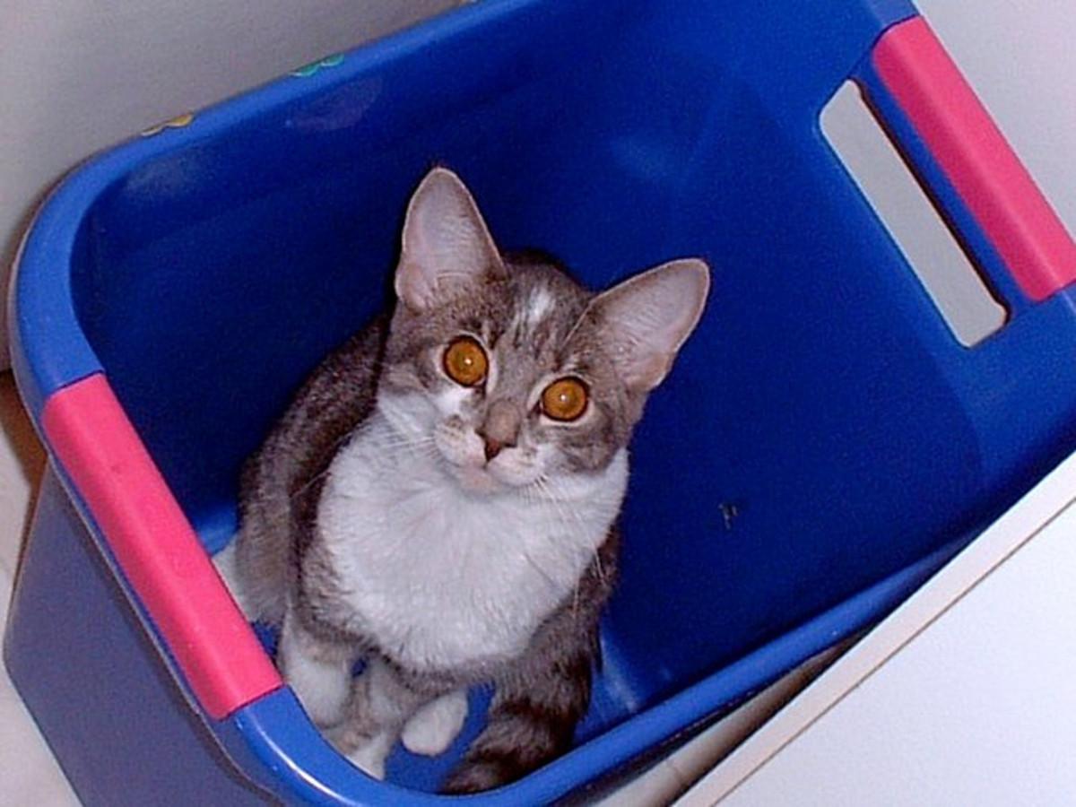 My Cat, Mr. Nibbles