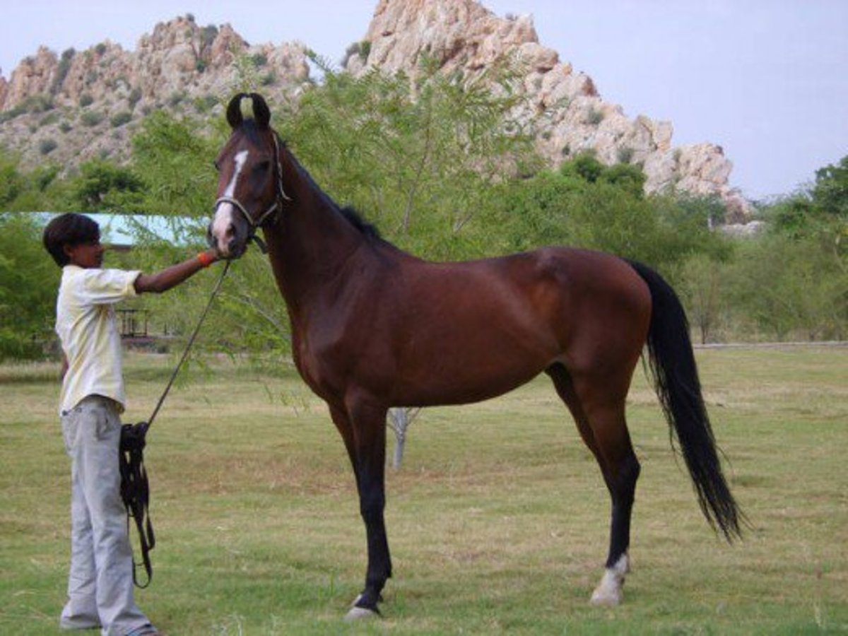 indian horse personal interview