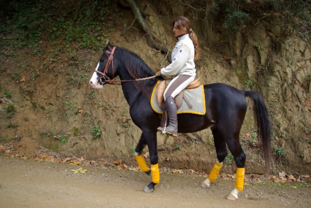 Marwari Horses are Beautiful