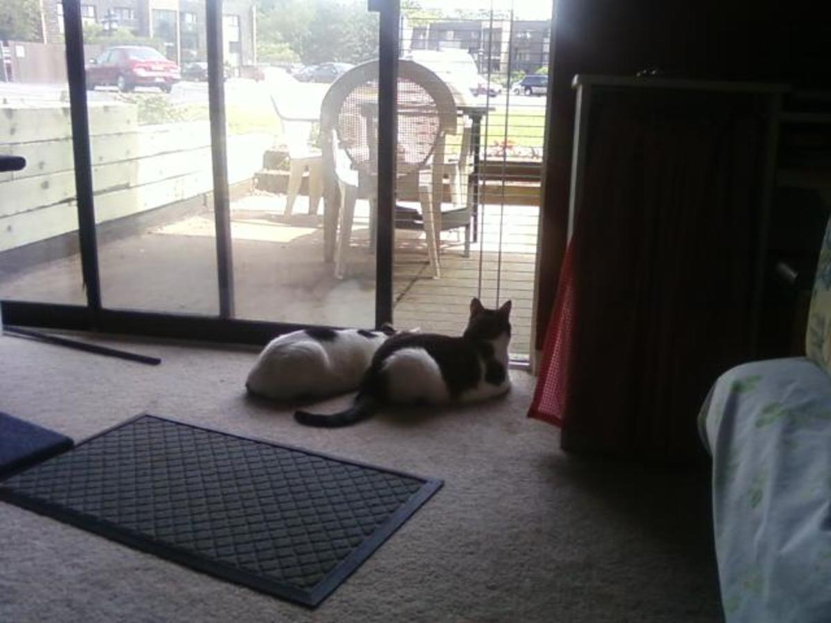 how-to-make-a-pet-proof-screen-panel-for-your-sliding-glass-door