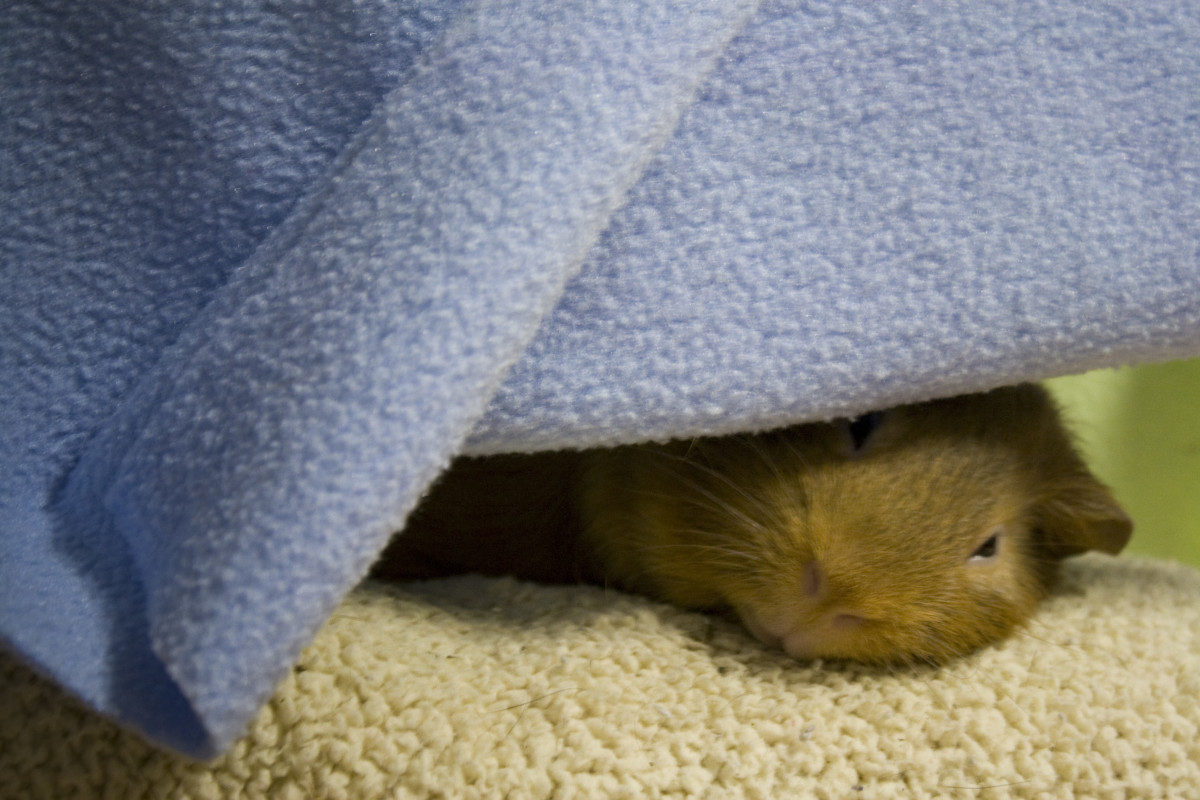 Wilson lulls off to sleep in his bunk bed, surrounded by cozy fleece