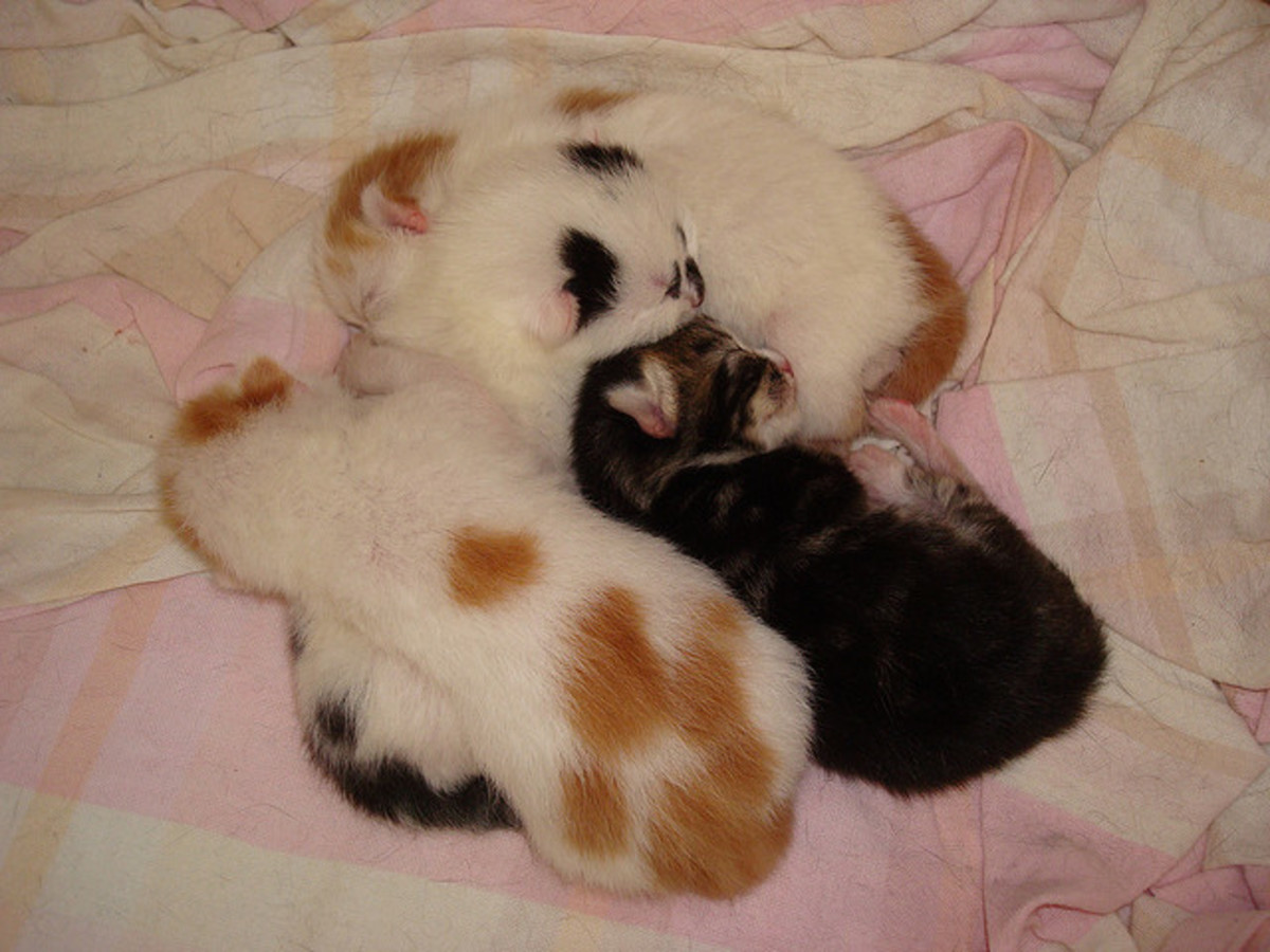 Kittens cuddle together for warmth and a sense of security.