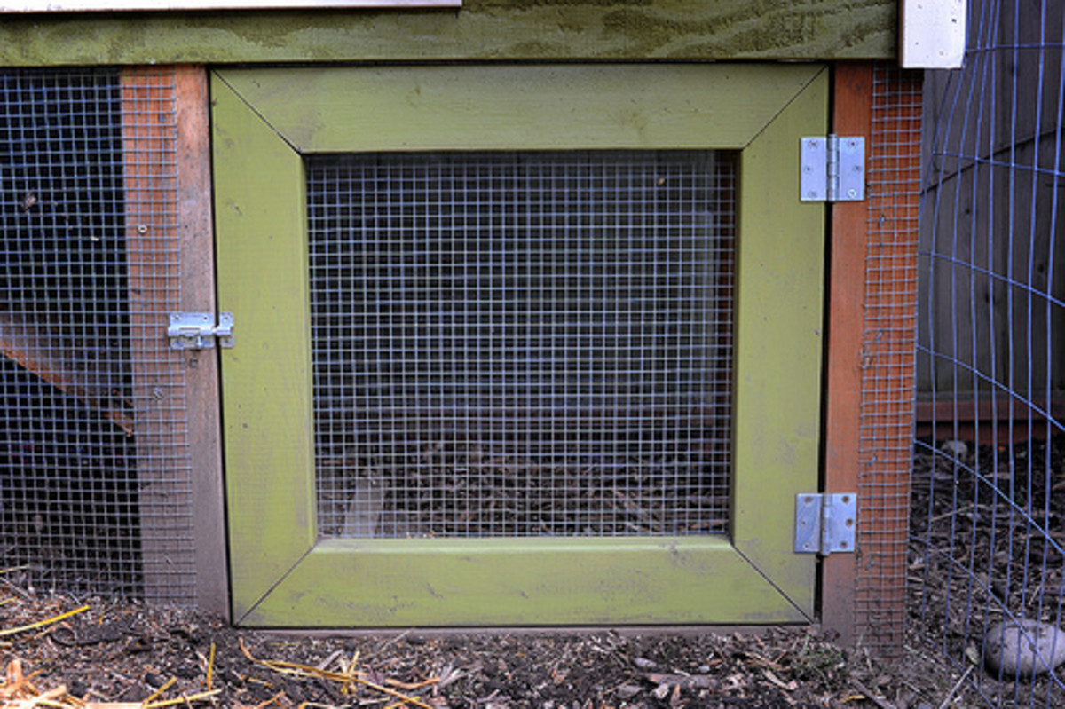 Sturdy chicken coop door