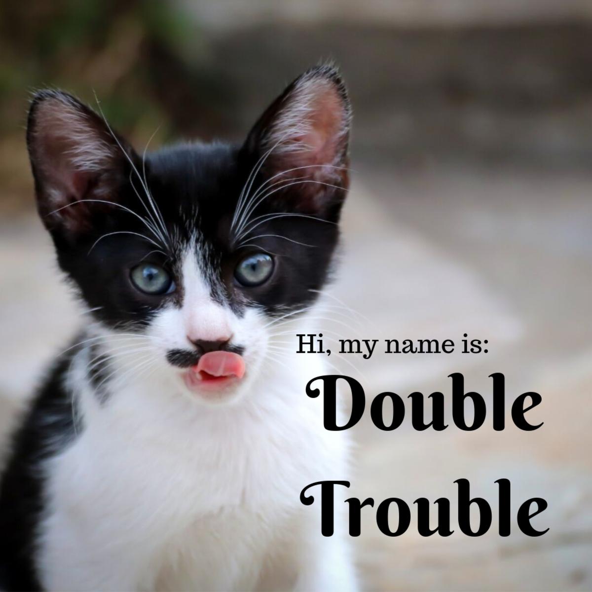 tuxedo-cat-names