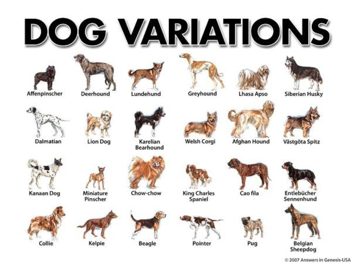 dogs-what-are-they