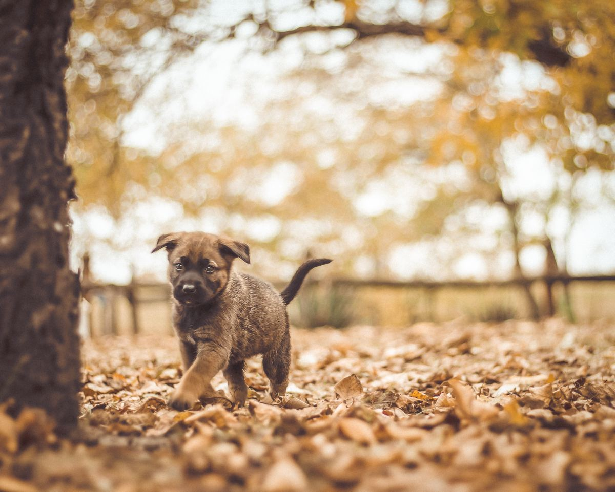 A key part of potty training your puppy is making sure they get plenty of time outside, but make sure that playtime comes after pee time.