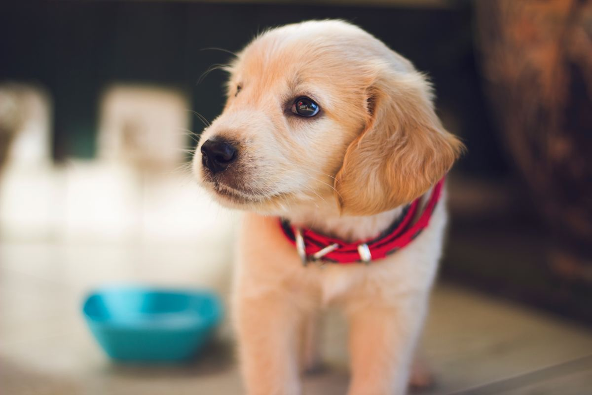 Potty training a puppy the right way takes time. Don't cut corners by using pee pads—it will backfire in the end!