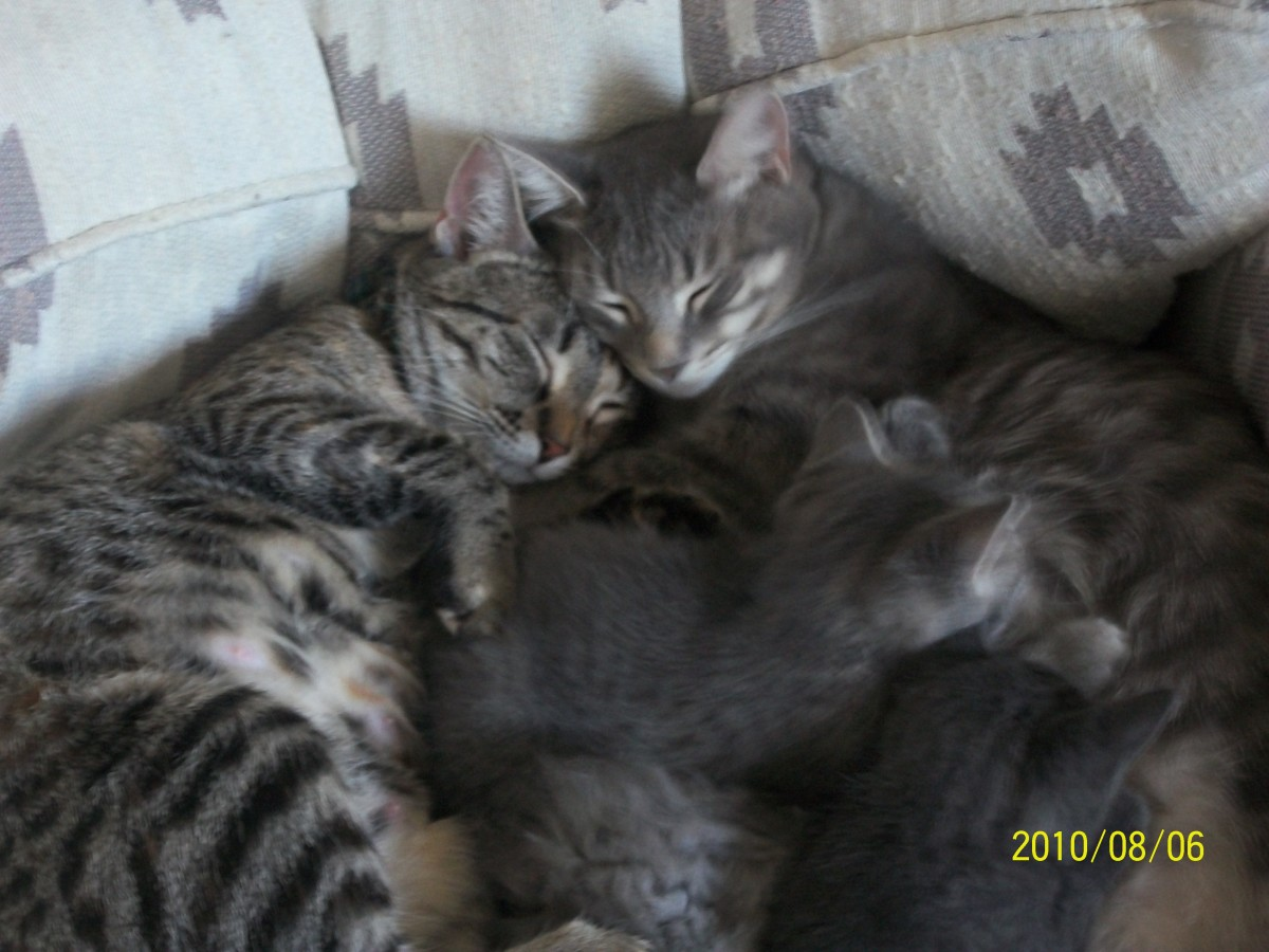 This is a picture we caught of the cat, Jo, with her three kittens and the other female cat, Shiloh.