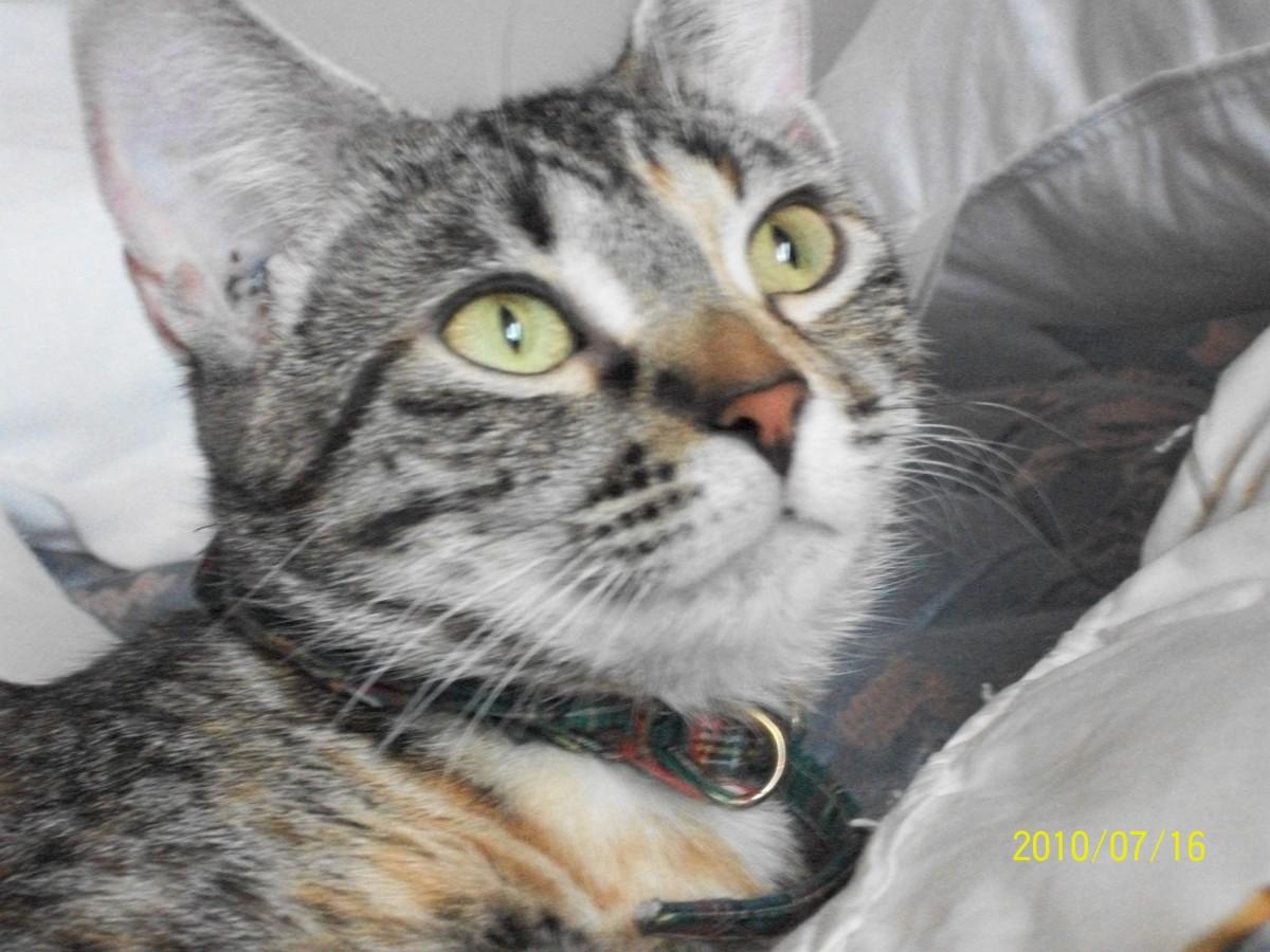 My sweet kitty, Shiloh.
