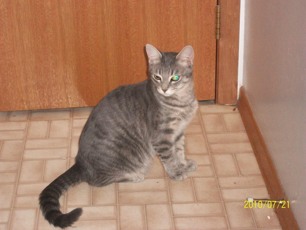 My cat, Jo.