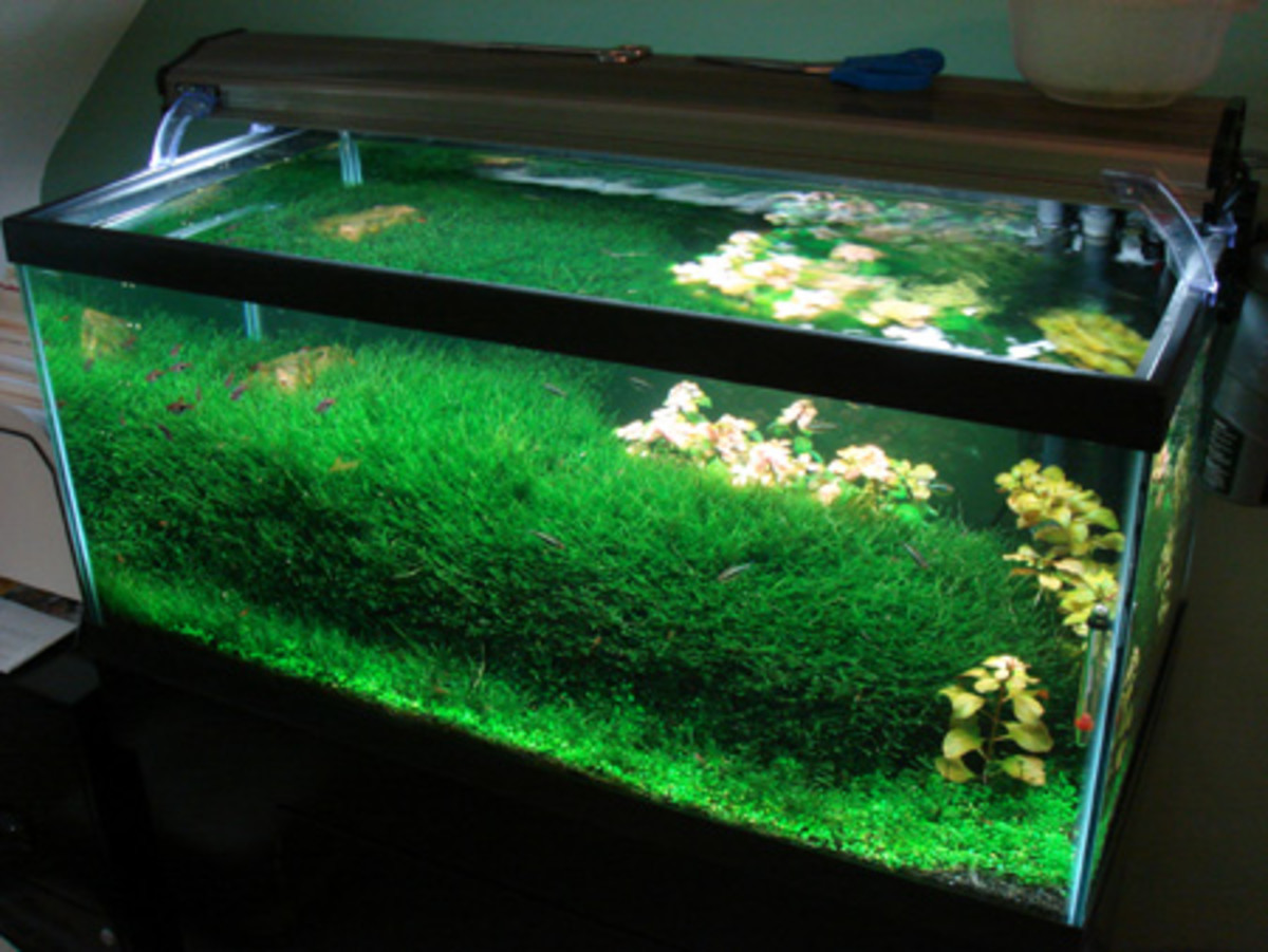 A nicely planted shrimp tank. Have fun with your aquascaping!