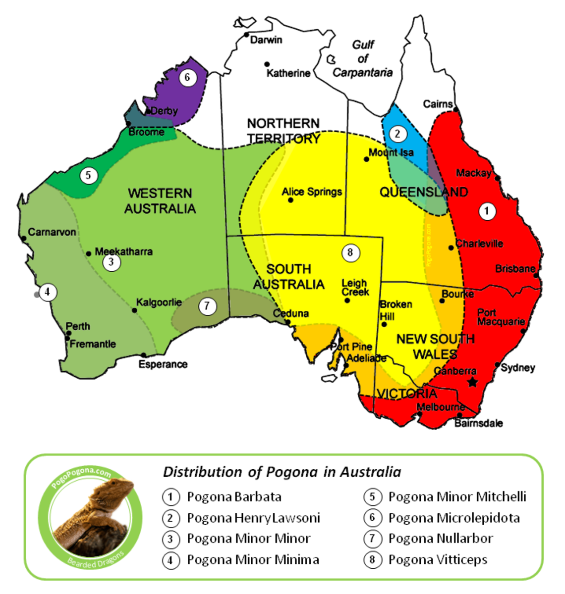 Bearded dragon distribution in Australia.
