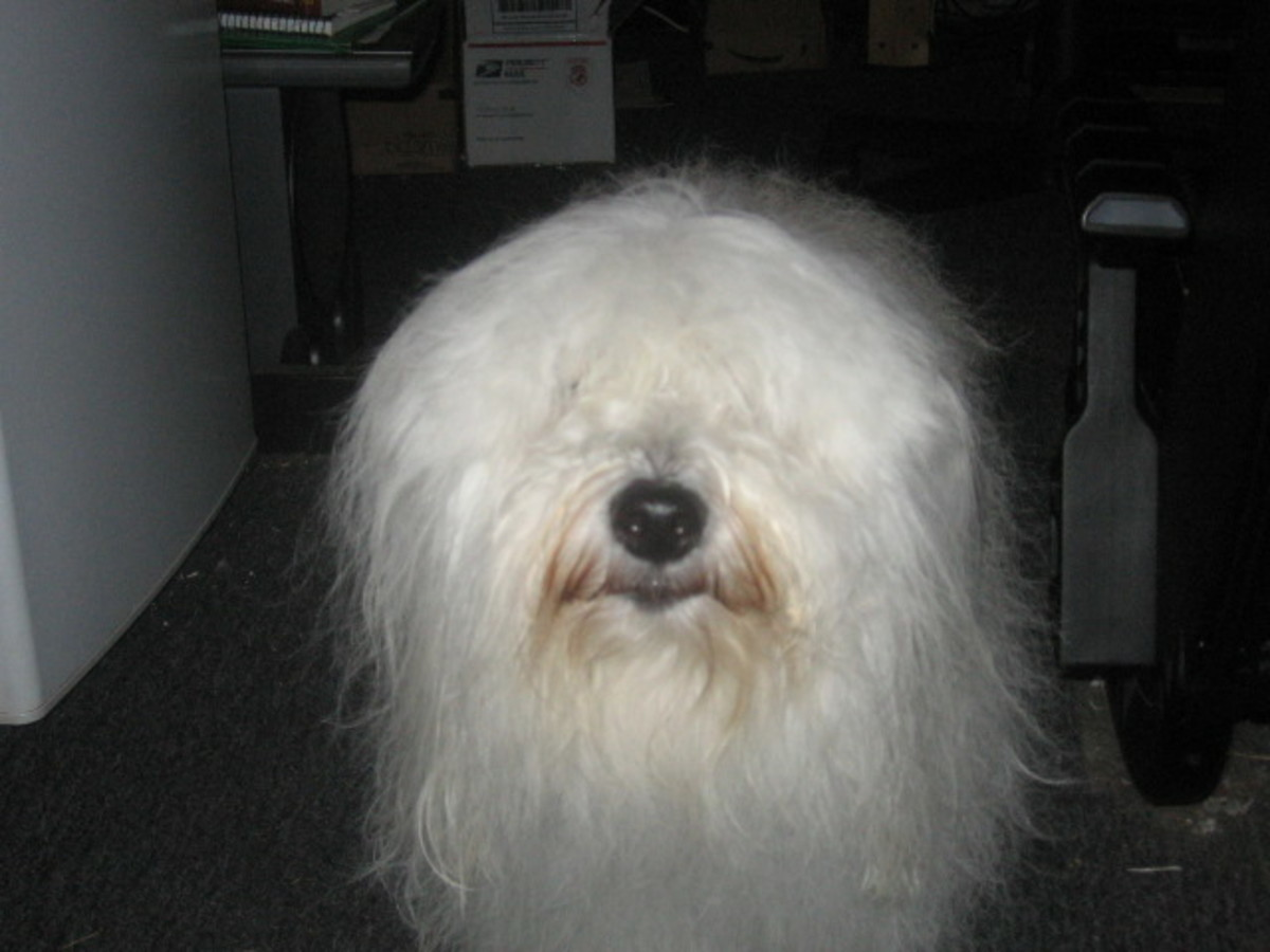 Wally, just after a good combing