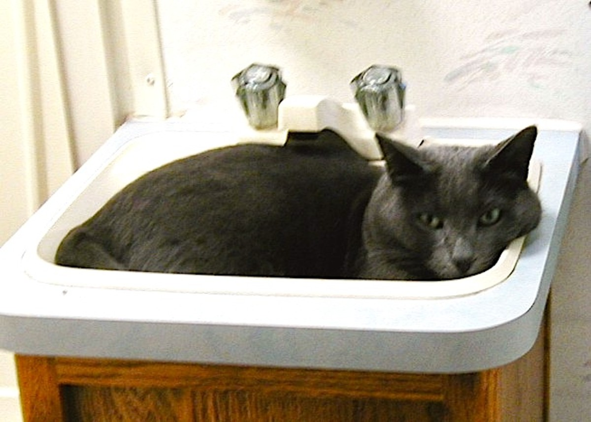 Shadow liked to curl up in the RV's bathroom sink when he felt nervous.