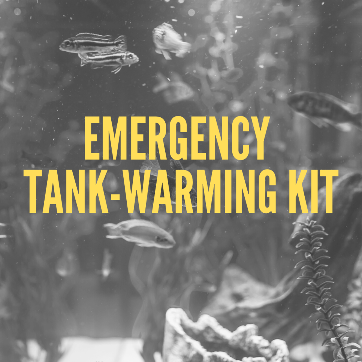 Necessary Supplies to Keep Your Fish Tank Warm During Power Outages