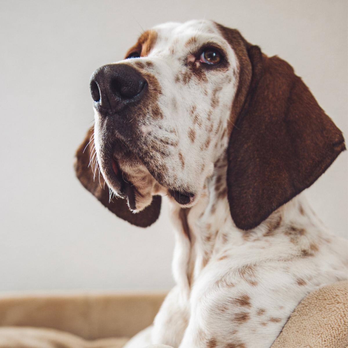 Make sure a dog rests after eating a meal.